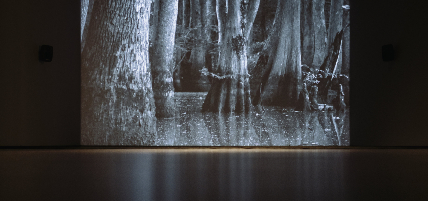 silent forest (installation view)