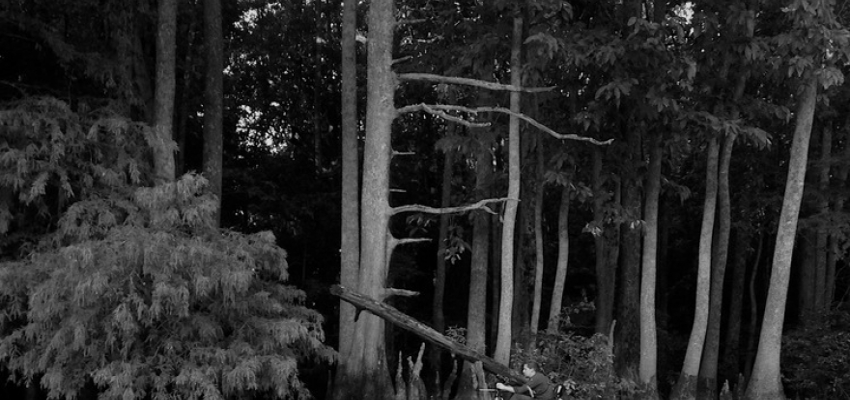 silent forest (field documentation)