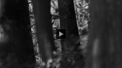 Vimeo link to Silent Forest (excerpt)